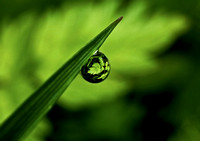 Dewdrop IV (on a blade of grass)